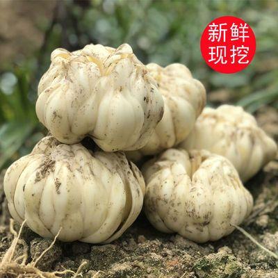 龙牙百合新鲜百合无硫食用新鲜现挖湖南农家特产百合莲子干货羹