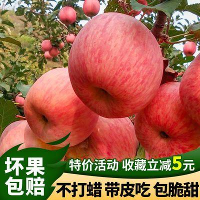 正宗烟台栖霞红富士苹果5/10斤 当季山东新鲜水果整箱批发包脆甜