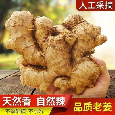 【现挖现发】山东生姜新鲜大黄姜老姜生姜月子姜生姜批发2/5/8斤