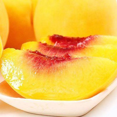 桃子黄桃水新鲜非油桃应季山东黄桃黄心现货现摘
