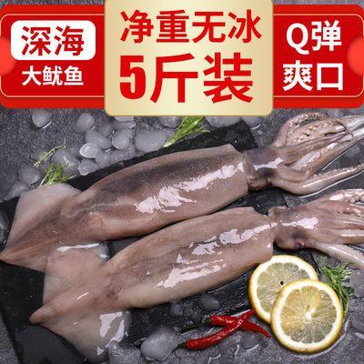 鲜鱿鱼八爪鱼冷冻海鲜鲜活尤鱼须新鲜烧烤食材批发大鱿鱼整只香辣