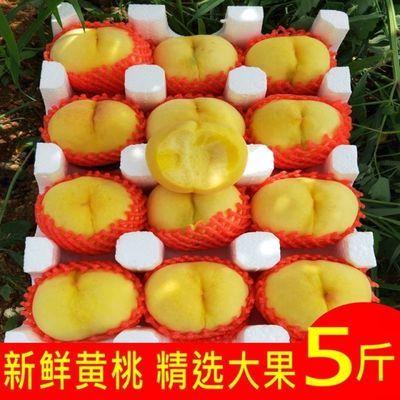 山东现摘黄桃新鲜水整箱非油桃黄心脆桃当季水