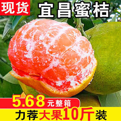 橘子新鲜桔子水果青桔孕妇水果柑橘蜜橘蜜桔蜜桔青皮蜜桔青皮橘子