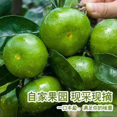 现摘青皮特早新鲜橘子蜜桔酸甜皮薄桔子宜昌产地早熟柑橘孕妇水果