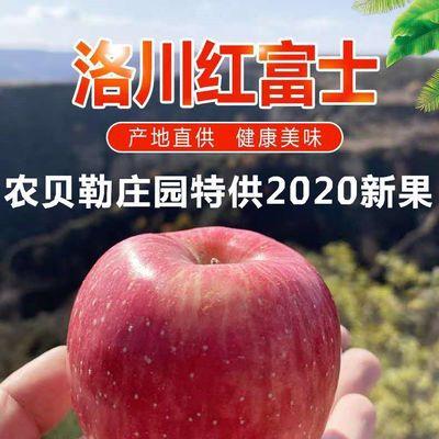 陕西洛川富士苹果新鲜当季冰糖心红富士脆甜多汁农家种植产地直发