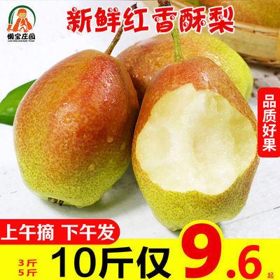 现摘香梨10斤陕西红香酥梨5斤3斤梨子批发应当季新鲜水果非库尔勒