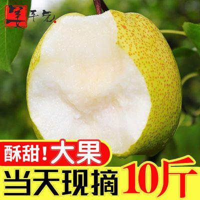 梨子酥梨正宗砀山水果新鲜10斤批发应季水果非皇冠梨雪梨香梨丰水