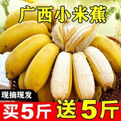 【现摘泡沫箱】广西小米蕉9斤应季新鲜水果3/5斤小香蕉芭蕉苹果蕉