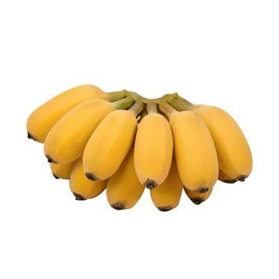 【苹果蕉】广西苹果蕉小米蕉新鲜水果香蕉水果批发孕妇香蕉批发