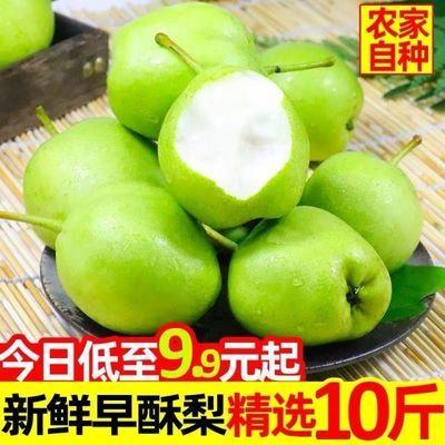 早酥梨陕西酸甜水果梨子青皮梨3斤/5斤/10斤孕妇新鲜水果非皇冠梨