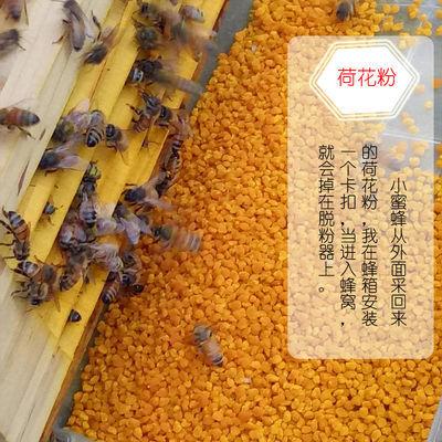 荷花粉2020年新货食用蜂花粉江西广昌蜂场直供瓶装莲花粉美容美白