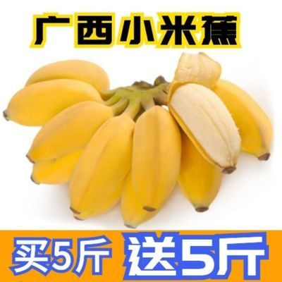 【现摘现发】广西小米蕉当季新鲜孕妇水果香蕉整箱批发非苹果芭蕉