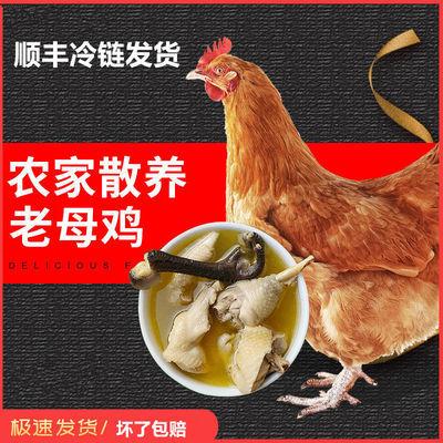 顺丰包邮散养3年老母鸡农家土鸡现杀柴鸡草鸡月子鸡笨鸡走地鸡