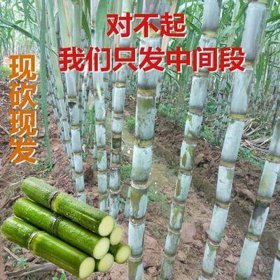 湖南绿皮青皮甘蔗新鲜整根孕妇新鲜水果应当季3/5/9斤雪蔗非陶山