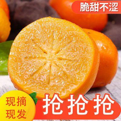 山西脆柿子硬柿子脆甜不涩阳丰当季水果现货现发巧克力脆柿子批发