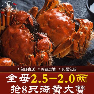 蟹品徽现货大闸蟹全母2.5-2.0两8只特大鲜活蟹农直发缺重包赔