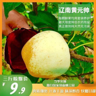 【现摘现发】辽南黄元帅苹果新鲜应当季水果3/5/8斤黄金帅整箱