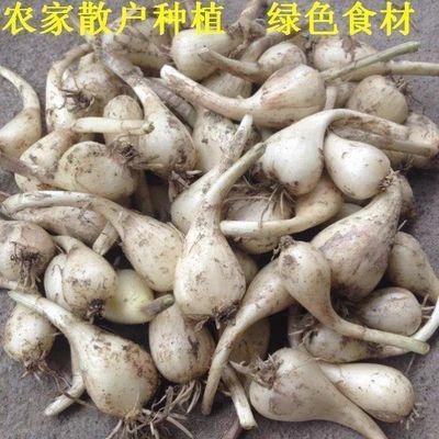农家自种藠头新鲜蔬菜现挖茭头无叶荞头包邮蕌头新鲜荞头