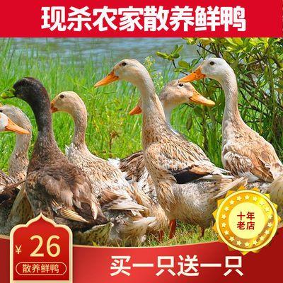 新鲜老鸭子土鸭三年鸭子肉整只鸭子活冷冻食品批发生鲜鸭肉类农村
