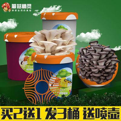蘑菇精灵杯种植菌包盒子桶儿童手工diy家庭阳台自种可食用大菌包