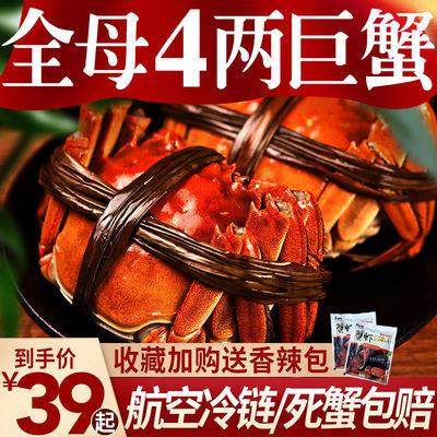 【全母大蟹】大闸蟹鲜活现货螃蟹40只0.8-4.0两中秋礼盒缺重包赔
