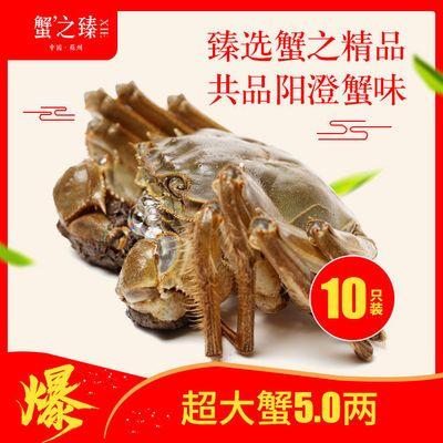 蟹之臻大闸蟹鲜活螃蟹 4.0两8只 多规格 蟹农直发
