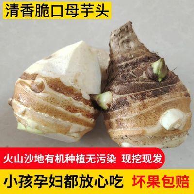 山东现挖新鲜芋头母香芋荔浦芋软糯小毛芋头牛奶芋母自种蔬菜包邮