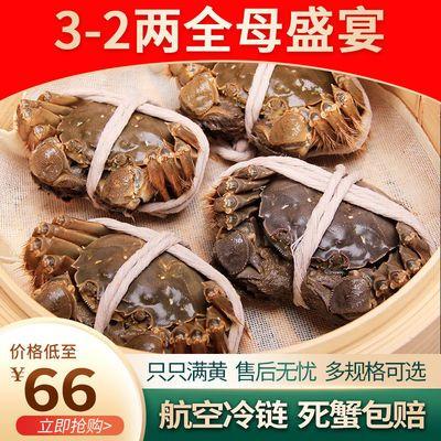 全母大闸蟹鲜活现货3.0两特大螃蟹苏州直发3.0两四记联洋死蟹包赔