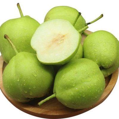 现摘陕西蒲城脆甜青皮早酥梨子绿皮梨子3/5/10斤应季水果整箱批发