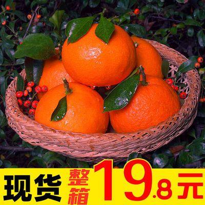【保温箱】丹棱爱媛38号果冻橙8斤柑橘桔子水果新鲜时令水果5/3斤