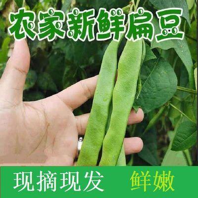 【顺丰包邮】现摘芸豆新鲜豆角四季豆扁豆角新鲜蔬菜非油豆角