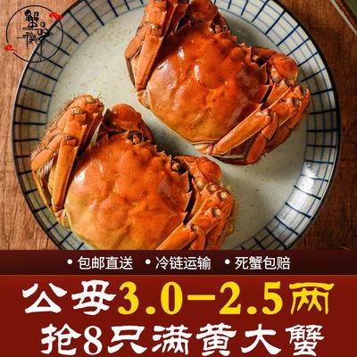 现货蟹品徽特大鲜活满黄大闸蟹全母3.0-2.5两8只海鲜水产