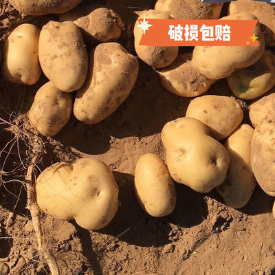 2020新鲜土豆批发5斤10斤绿色蔬菜马拉松大小白心黄皮沙面现挖
