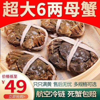 全母大闸蟹鲜活现货特大螃蟹3.0两四记联洋超大清水蟹包只只满黄