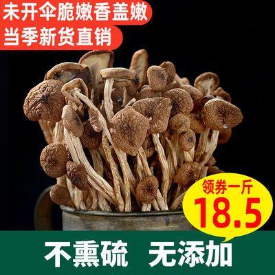 吉美味茶树菇古田农家不开伞嫩菇新食用菌批发干货煲汤250g/1000g