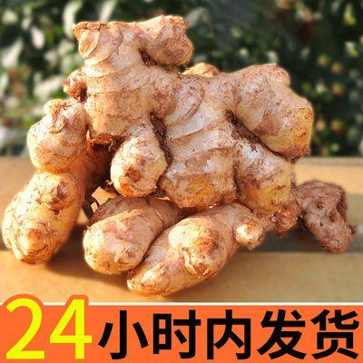 【现挖新姜】云南新鲜小黄姜2/3/5/10斤嫩姜生姜新鲜蔬菜非老姜