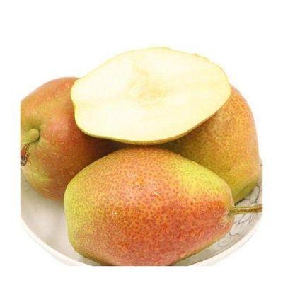 陕西红香酥梨应季新鲜水果整箱批发1-5-10斤现摘源自库尔勒香梨子