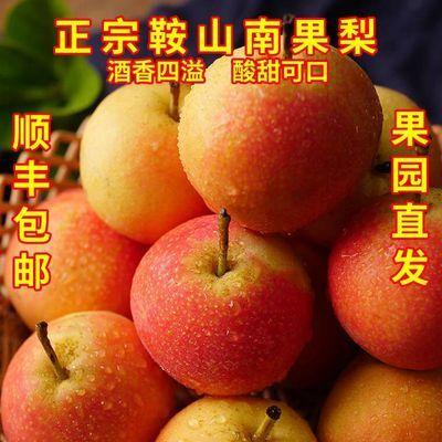 东北特产鞍山南果梨南国梨应当季孕妇新鲜水果果园直发顺丰包邮
