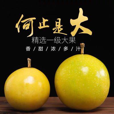 广西高山无污染黄金百香果鸡蛋果当季水果送开果器