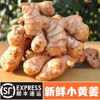 【顺丰包邮】云南新鲜小黄姜2/5斤嫩姜生姜批发月子姜新鲜蔬菜