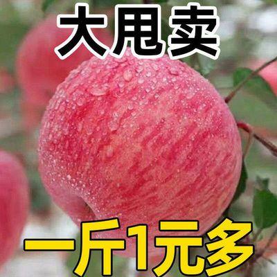 冰糖心红富士苹果当季水果新鲜包邮整箱红富士应季丑苹果3/5/10斤