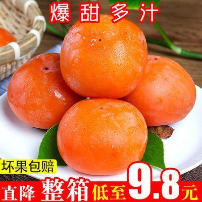 【红柿子】甜软新鲜小柿子硬冻柿子脆皮水果非脆柿火晶柿10/5/2斤