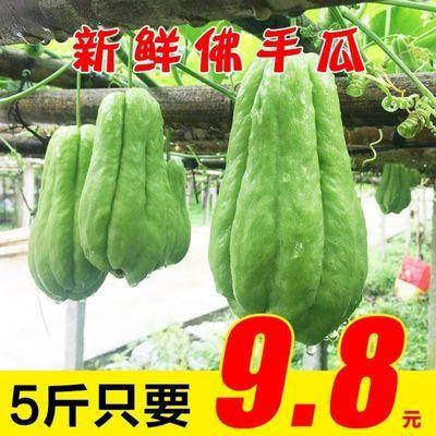 贵州新鲜佛手瓜高原农家自种蔬菜洋瓜捧瓜丰收窝瓜寿瓜3斤5斤包邮