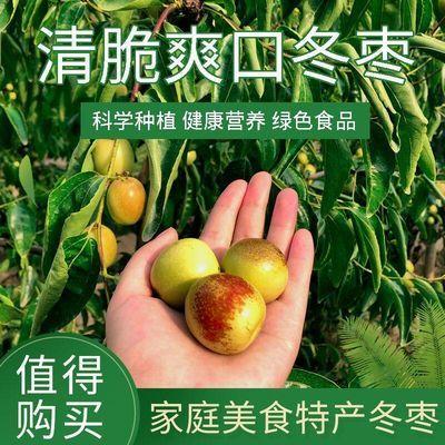 【现摘现发】山东沾化冬枣脆甜枣子青枣孕妇水果鲜枣脆枣