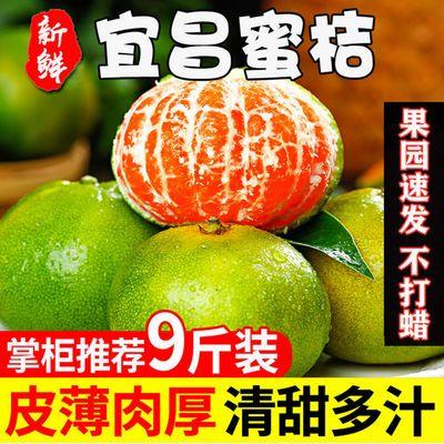 现摘速发宜昌青皮蜜桔特早橘子酸甜皮薄桔子本地早熟柑橘孕妇水果