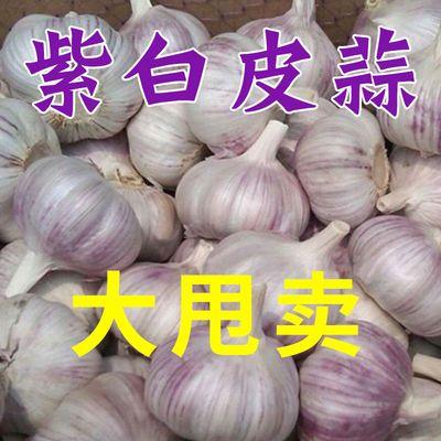 【超低价】金乡大蒜紫白皮蒜新鲜干蒜大蒜头红皮大蒜农家蒜批发