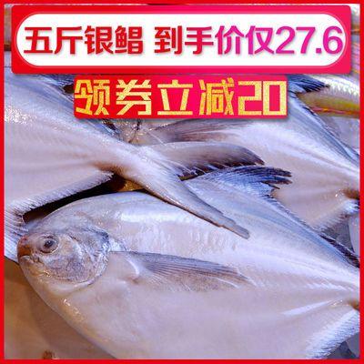 舟山银鲳鱼新鲜白鲳鱼冷冻鲜活野生海鱼平鱼扁鱼海鲜水产海鲜批发