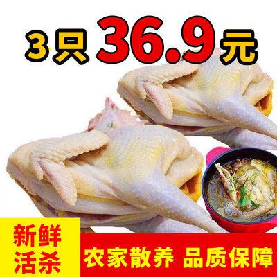 https://t00img.yangkeduo.com/goods/images/2020-10-12/de9c6ab868235660676a57fffb709e41.jpeg