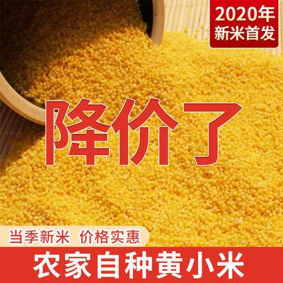 36781/山西农家新小米5斤养胃黄小米月子米五谷杂粮粥宝宝米小黄米1斤批