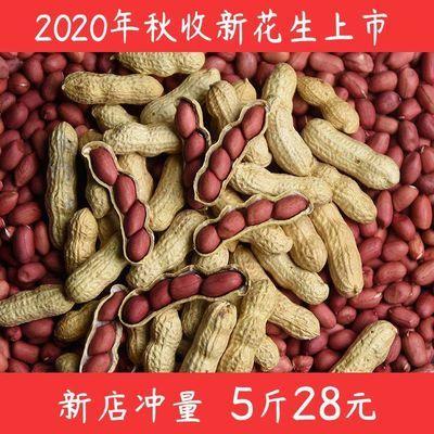 2020年新货红皮花生带壳生花生四粒红花生米批发晒干红衣花生种子